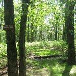 side trail to Tiorati Lake