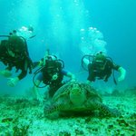 Yucatan Diving & Travel Foto