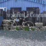 Zoom sur le vélo