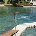 Famous Dolphin pool