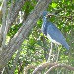 Heron at Commodore Creek