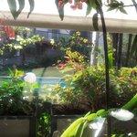 Vista desde salon-comedor a la piscinas y zona ajardinada
