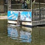 krokodillen voeren