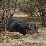 opgepast, nijlpaarden en olifanten kun je tegenkomen op het terrein van T&T