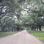 A Great Southern Entrance to the Plantation