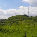 Fantastic tea plantations