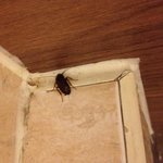 Cockroach on the toilet