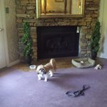 Jack in front of fireplace... very nice