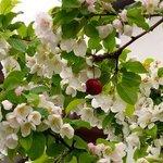 Fruit trees everywhere