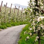 Wonderful hiking trails through orchards.
