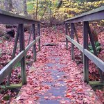 Bridge on a trail covered in fall leaves