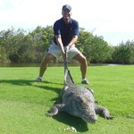 Lots of wild gators on the golf courses