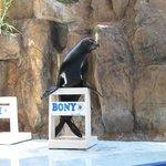 The Sea Lion Show's main star, Bony!