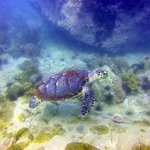 Turtle at Koh Man Wichai