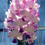 Thai Orchid Farm