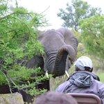 durante un safari