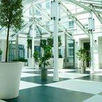 Patio with Orange & Olives trees (lobby)