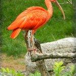 Птицы в Луизен-парке