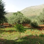 Tranquil and fragrant Sicilian countryside - butterflies, wild poppies, lemon trees and olive gr