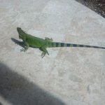 intriguing pool visitor!