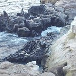 Seals on the Rocks at La Jolla Cove