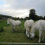 Kilburn Horses
