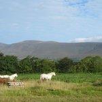 Kilburn Horses, mountains in the background
