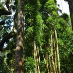 Tantalus Round Top Drive - tolle Fauna