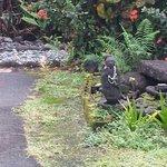 one of many gardens at Akikos