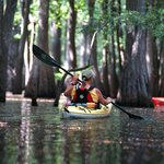 Paddle through a Flooded Forest with us