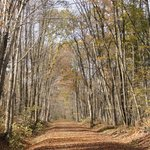 Bike Trail in Fall