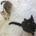 Кошки возле стола