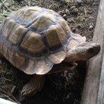 On site tortoise