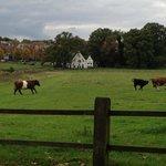 Sonsbeek Park - an easy 10 minute stroll