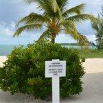 Beachstyle