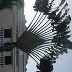 Travelers Palm in front of resort