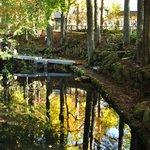 入口付近の池