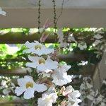 ホテルの入り口に咲いている花