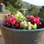 цветы на террасе отеля