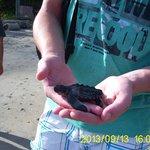 Schildkrötenaufzucht