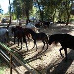 Padock con los caballos