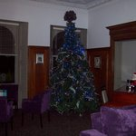 Tree in one of the lounges