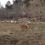 Big Horn Sheep at Kenosha Cafe