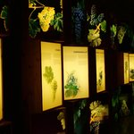 Museo del vino en Olite