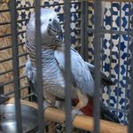 Poulette - the feisty entertainer at Riad al Bartal