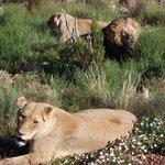 Aquilla Game Reserve