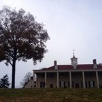 Rear of the house and giant pecan tree