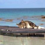 la dure vie de chat