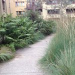 Interior courtyard - the view a garden-view room would see. Lovely native specimens.
