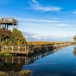 Marsh Boardwalk - Point Pelee National Park
